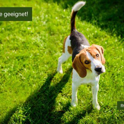 Rollrasen für Haustiere, Bester Rollrasen für Haustiere 2020, Rollrasen online kaufen