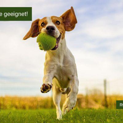 Rollrasen, Premiumrasen für Haustiere, robuster Rollrasen für Haustiere