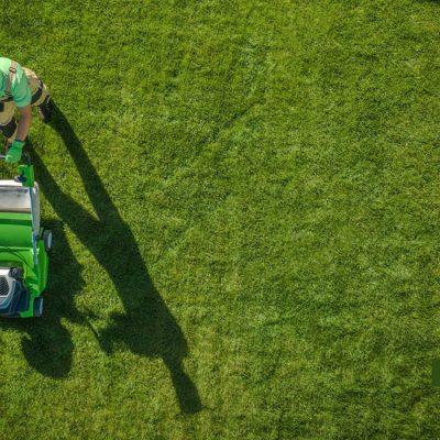 Bester Rollrasen für den Mähroboter und den Rasenmäher, feiner Rollrasen